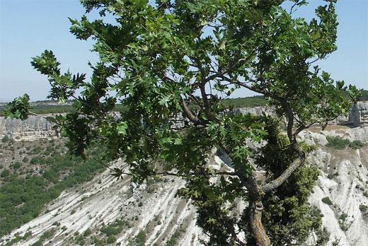 Бельбекский каньон памятник природы. Описание, как добраться