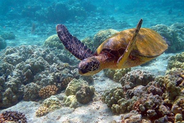 Большой барьерный риф, Австралия. Где находится, чем знаменит. Описание, информация, пролив Кука