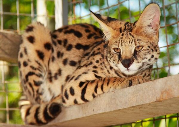 Самые редкие, экзотические животные. Фото и названия. Кого лучше купить домой
