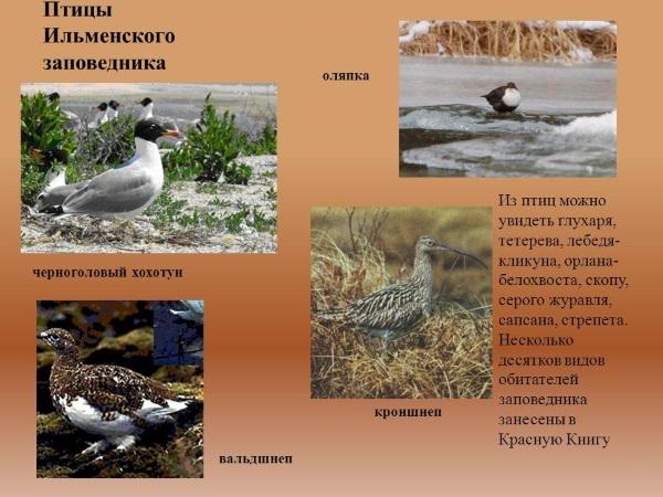 Ильменский заповедник. Где находится, чем славится, карта, музей, животные, экскурсии