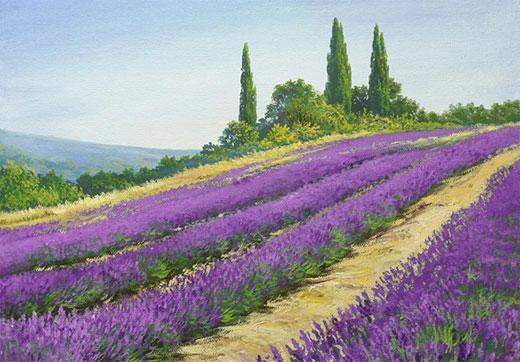 Лавандовые поля. Фото. Где находятся, когда цветут. Интересные факты, известные картины