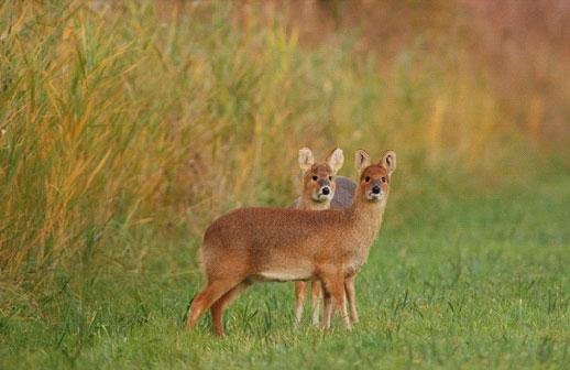 Самые экзотические и необычные животные в мире. Названия и описание