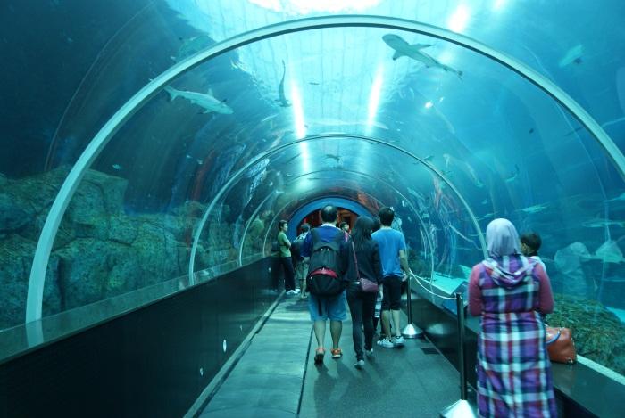 Самые большие океанариумы в мире, России. Где находится, цены билетов, описание
