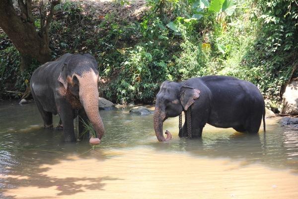 Шри-Ланка. Остров на карте, сезон для отдыха, достопримечательности, столица, отели, валюта