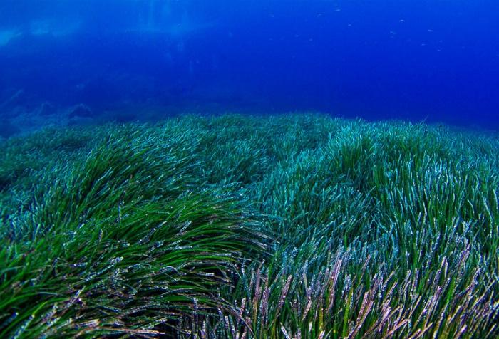 Средиземное море. Где находится, глубина, острова, моря, курорты, страны