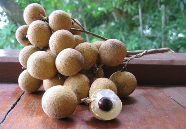 Тайские фрукты. Названия и фото, полезные свойства, описание, как правильно есть