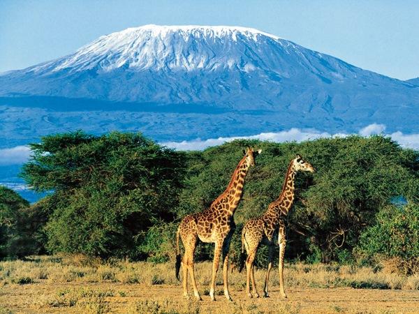 Гора Килиманджаро детально о вулкане Танзании с фото
