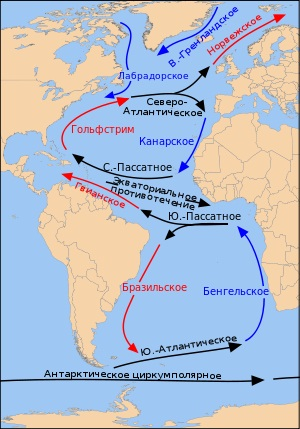 Атлантический океан. Органический мир, виды, разновидности рыб, список животных и растений