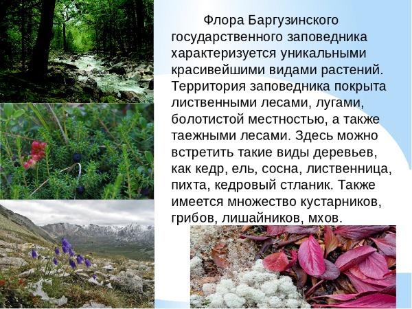 Баргузинский заповедник. Где находится, климат, природная зона, озера, животные, фото