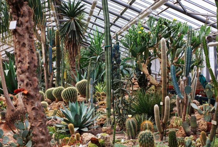 Ботанический сад СПб. Часы работы, цены, история, фото, выставки 2020