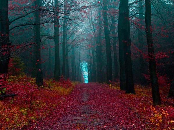 Горы Шварцвальд в Германии. Достопримечательности, лес на карте, как добраться, отели