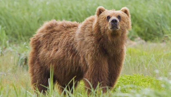 Катунский биосферный заповедник, Республика Алтай. Фото, где находится, животные и природа