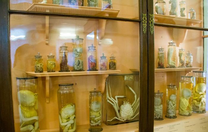Музеи Питера, которые стоит посетить. Топ-20 самых интересных