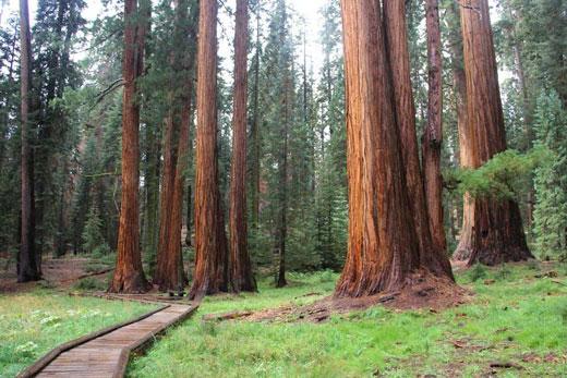 Национальный парк Секвойя, США. Фото, описание, где находится, карта