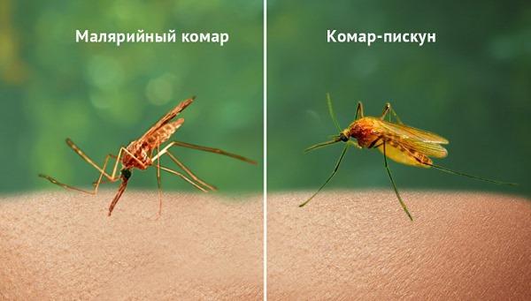Самые опасные насекомые в мире. Топ-10 с названиями, описание