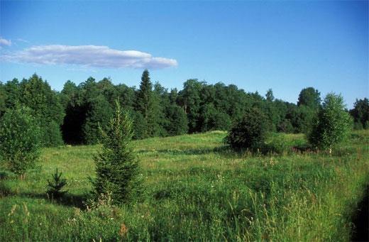 Валдайская возвышенность. Где находится на карте России, климат, животный и растительный мир