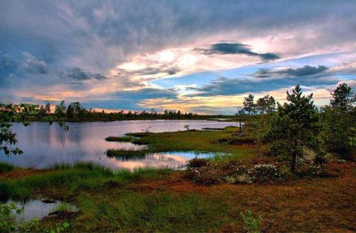 Васюганские болота. Интересные факты, расположение на карте России