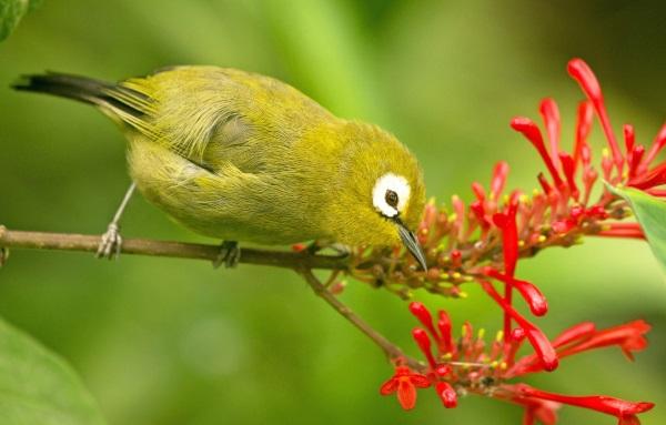 Национальный парк Комодо в Индонезии. Фото, природа, животные, растительный мир