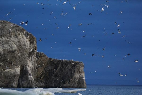 Остров Врангеля. Где находится на карте мира, население, животные, природа, кто открыл заповедник, почему так называется