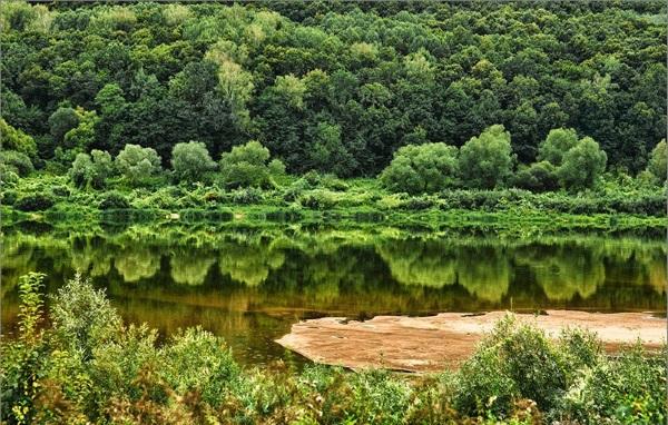 Приокский-террасный заповедник. Животные, растения, адрес, как добраться, фото