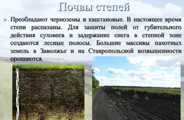 Природные зоны России. Таблица, климат, география окружающего мира