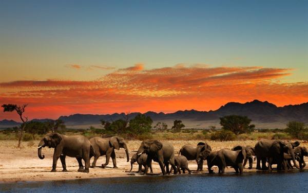 Пустыня Намиб. Где находится на карте, как образовалась, животные, фото, природа