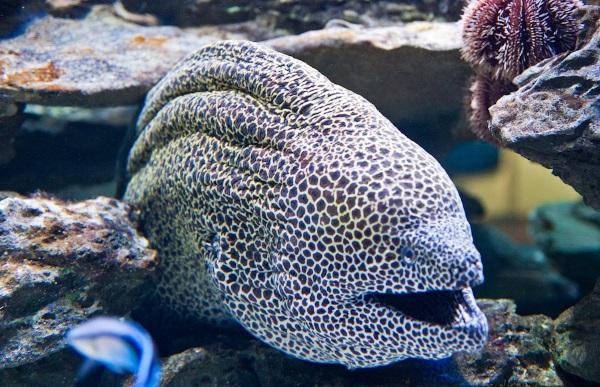 Самые большие аквариумы в мире Топ-10. Фото, видео, где находится