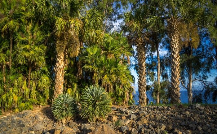 Санта Крус де Тенерифе, Испания. Достопримечательности, пляжи, фото и описание на карте, отдых