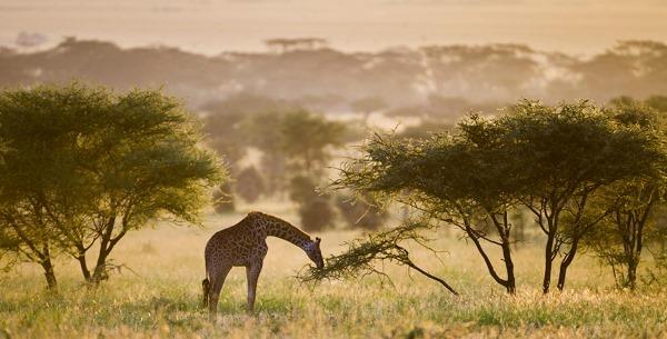 Национальный парк Серенгети, Танзания, Африка. Культурное и природное наследие