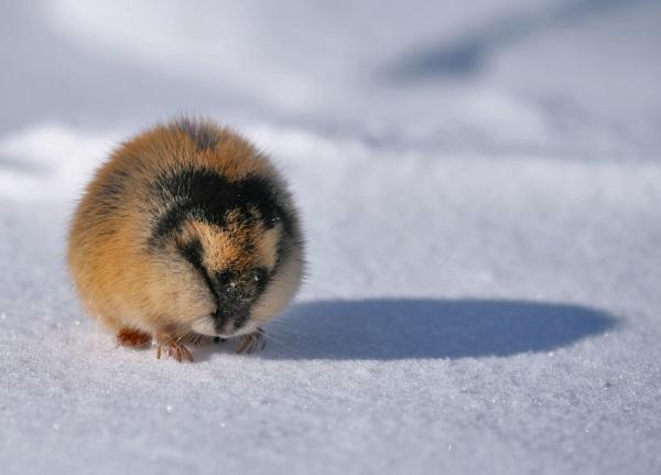 Арктические пустыни России. Географическое положение, климат, животный, растительный мир