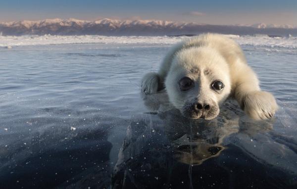 Байкал. Фото в хорошем качестве. Природные характеристики, факты и уникальность озера