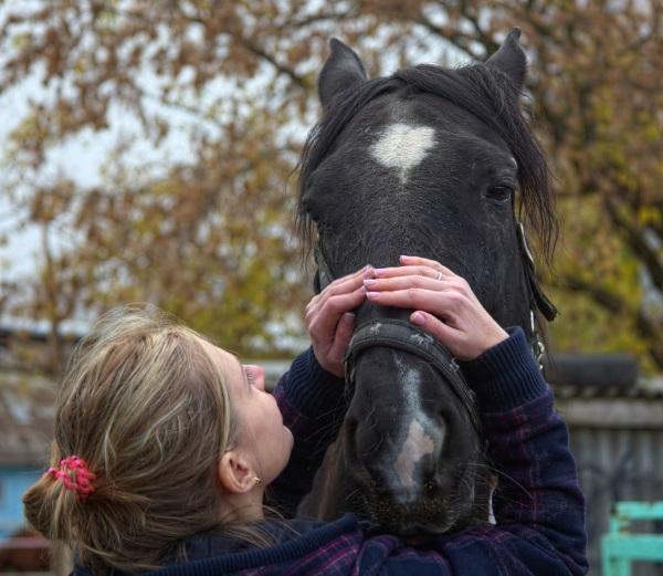Катание на лошадях в Подмосковье с проживанием в домиках, все включено. Цены и отзывы