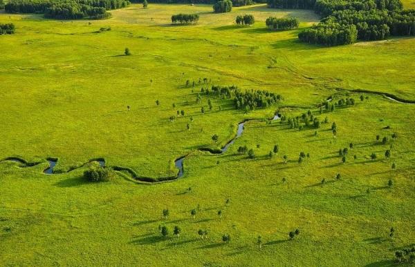 Природные зоны центральной России. Карта, описание, животные, растения, природа
