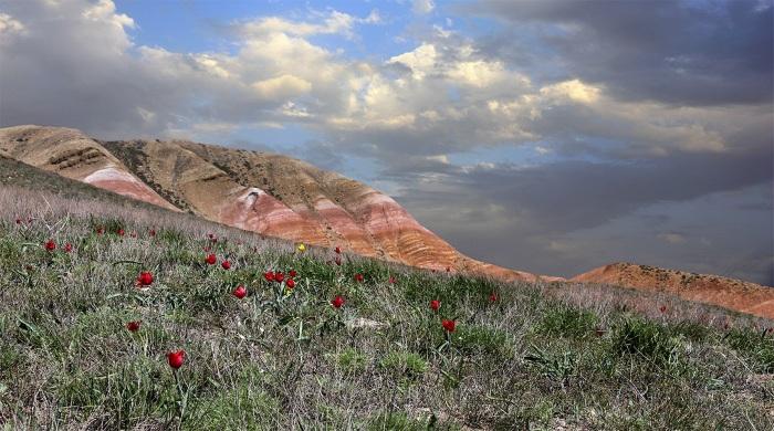 Пустыни и полупустыни России, животные и растения, климатический пояс, характеристика зоны