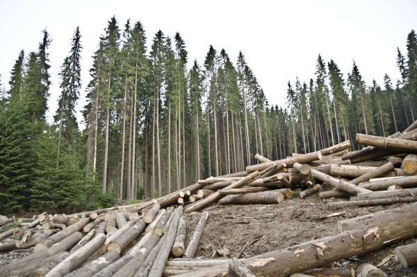 Широколиственные леса России. Географическое положение, климат, животные, растительный мир, фото