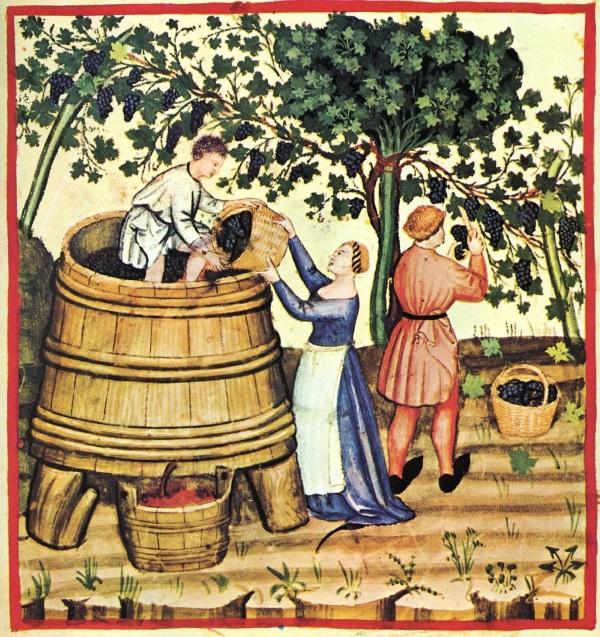 Винодельческие регионы Франции. Список самых известных. Описание, сорта вин