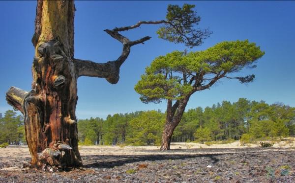 Забайкальский национальный парк. Фото, где на карте, животные и растения