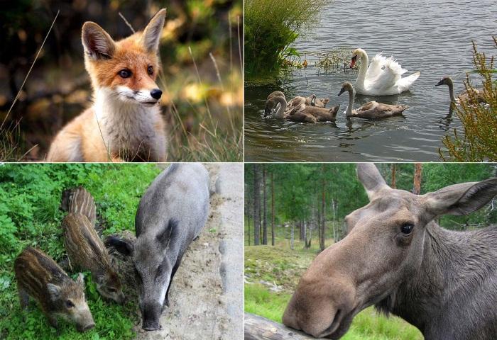 Хвалынский национальный парк. Достопримечательности, животные, растительный мир, фото