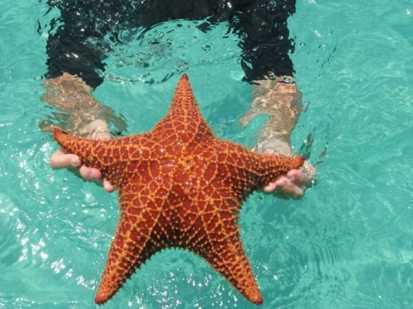 Морская звезда. Фото, типы, опасна ли, можно ли есть, интересные факты