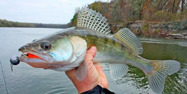 Рыбинское водохранилище. Рыбалка, отдых, охота. Рыболовные базы, пляж, фото