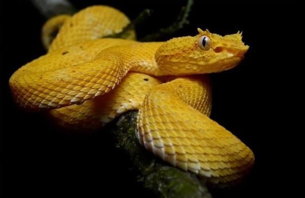 Топ-10 самых ядовитых существ в мире по Книге рекордов Гиннеса. Фото, где обитают