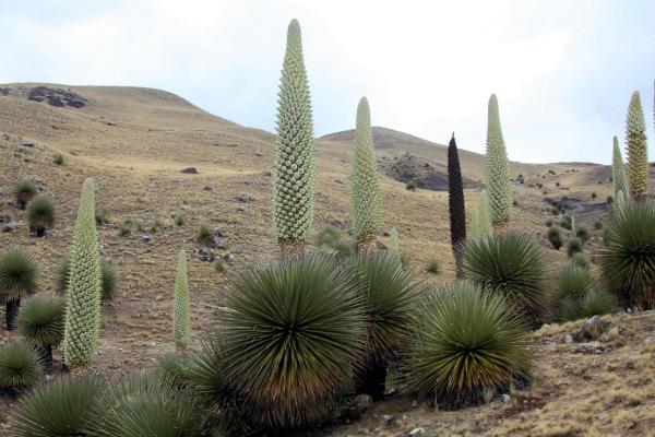 Самые большие цветы в мире: высокие, страшные. Фото, где растут, названия