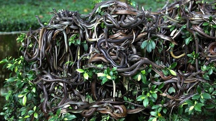 Самые опасные острова в мире со змеями, аборигенами, откуда не возвращаются. Топ-10, фото, видео