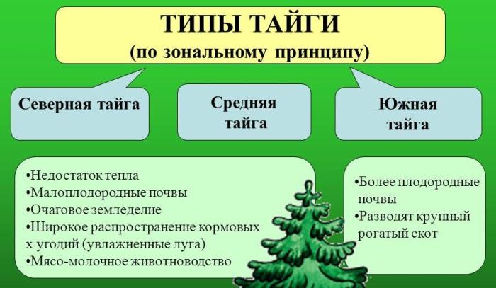 Тайга России. Фото, где находится, площадь, природа, животные, растения, климатические условия