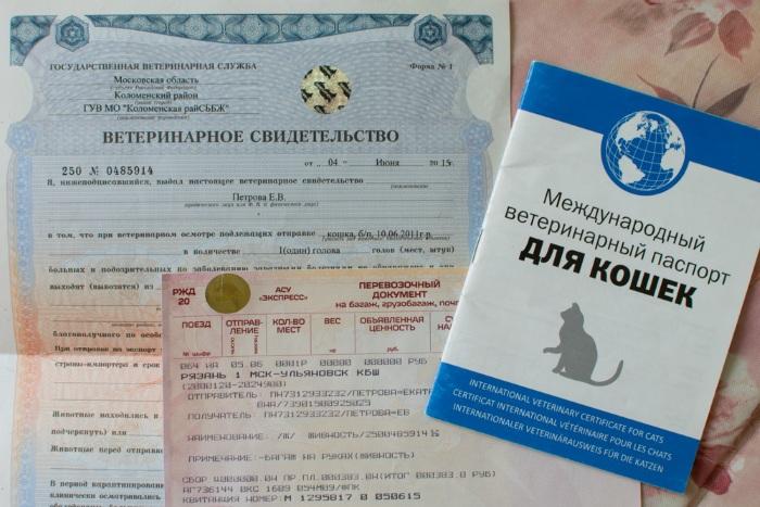 Загранпаспорт в грузию нужен или нет 2019