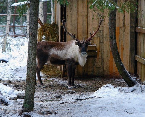 Экскурсии по Карелии из Петрозаводска летом, зимой, осенью, весной. Цены и отзывы
