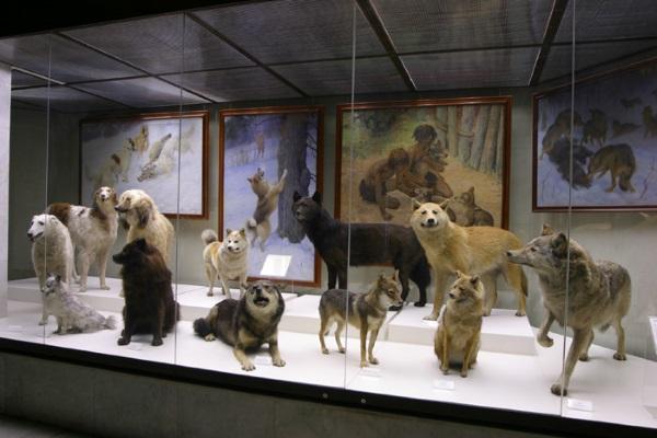 Государственный Дарвиновский музей, Москва. Адрес, фото, как добраться, время работы