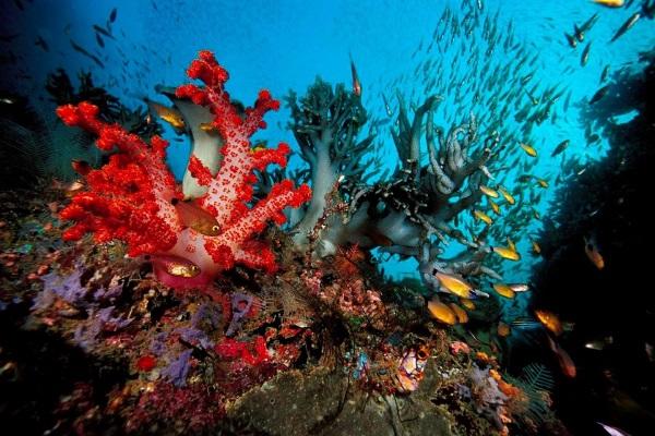 Красивые моря и океаны мира. Список, фото, интересные факты