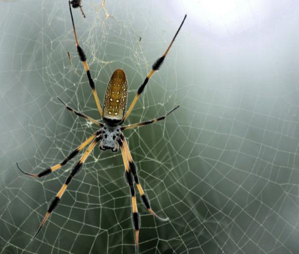 Самые большие пауки в мире, фотографии. Названия, где обитают на планете, интересные факты