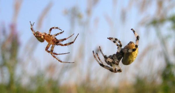 Самые ядовитые и опасные пауки в мире Топ-10. Фото, где обитают